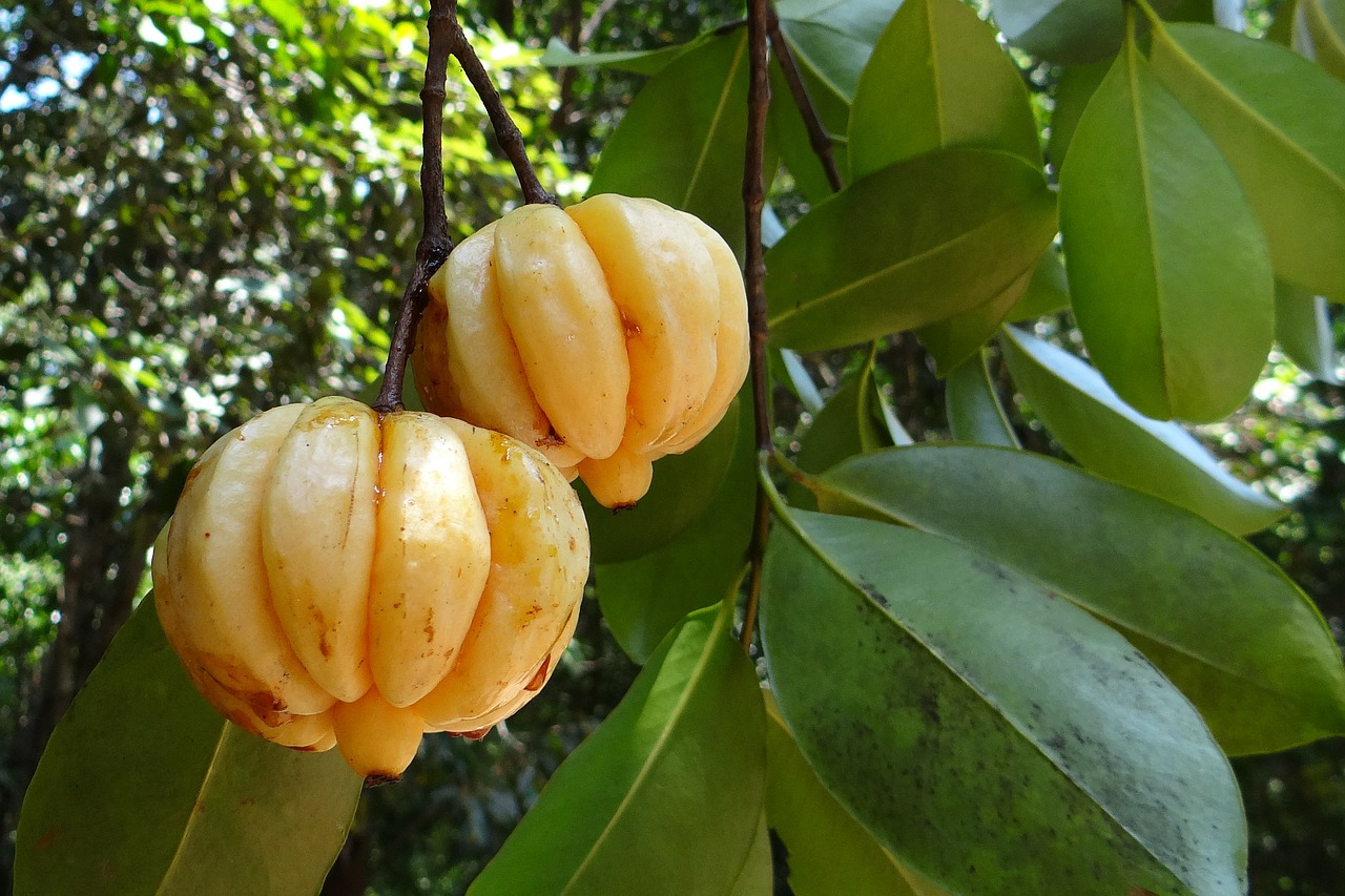 Garcinia Ca,mbogia Review